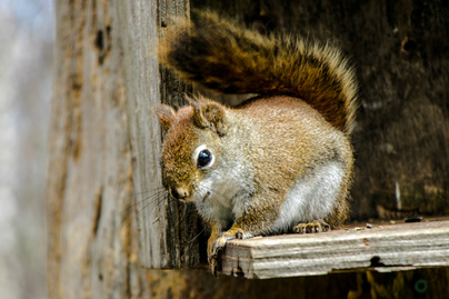mókuskák nyitó