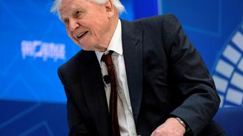 Sir David Attenborough: Nagyobb egyenlőség kell a népek között, a nagy nyugati nemzeteknek áldozatot kell hozniuk