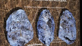 Itt látható az első magyar dinótojás!