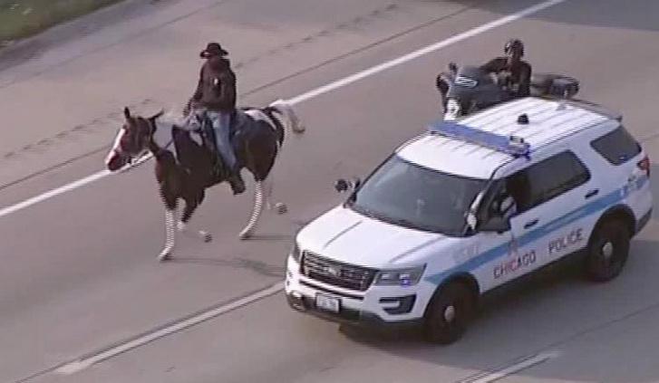 200921192110-horse-on-highway-arrest-exlarge-169