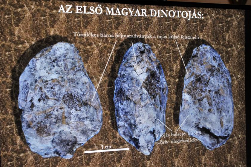 Megtalálták az első magyarországi dinoszaurusztojásokat - Meglepően aprók