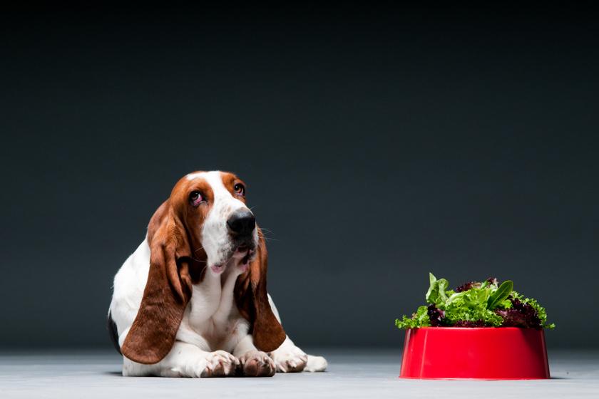 A gazdik egy része egyáltalán nem adna húst a háziállatának - Vegetáriánusként nevelik a kutyákat és macskákat