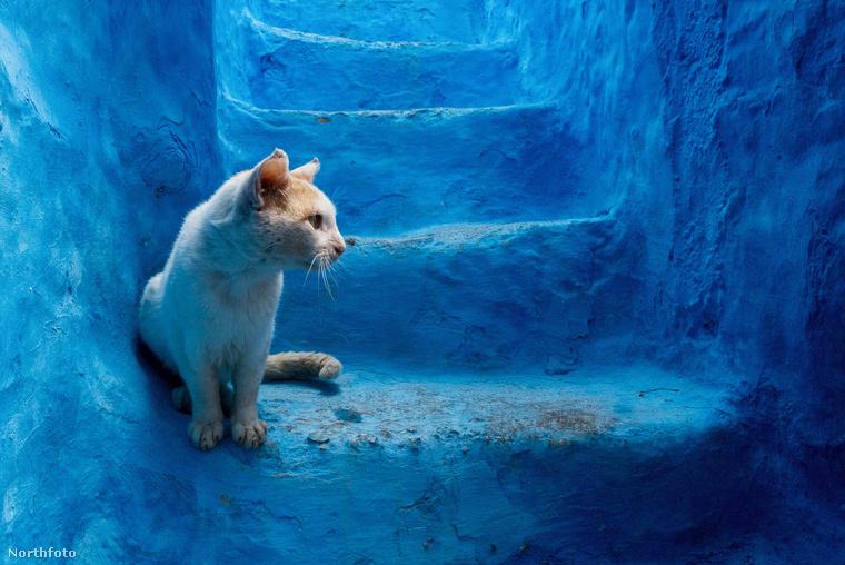 Chefchaouen nemcsak turistákban bővelkedett, hanem macskákban is, ezért egy cicás képpel zárjuk lapozgatónkat