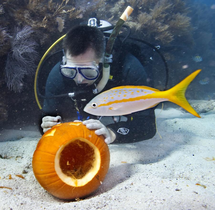 Az Egyesült Államokban a tökfaragást képtelenség túlzásba vinni, Key Westnek például saját vízalatti tökfaragó versenye van.