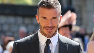 David Beckham méhésznek áll