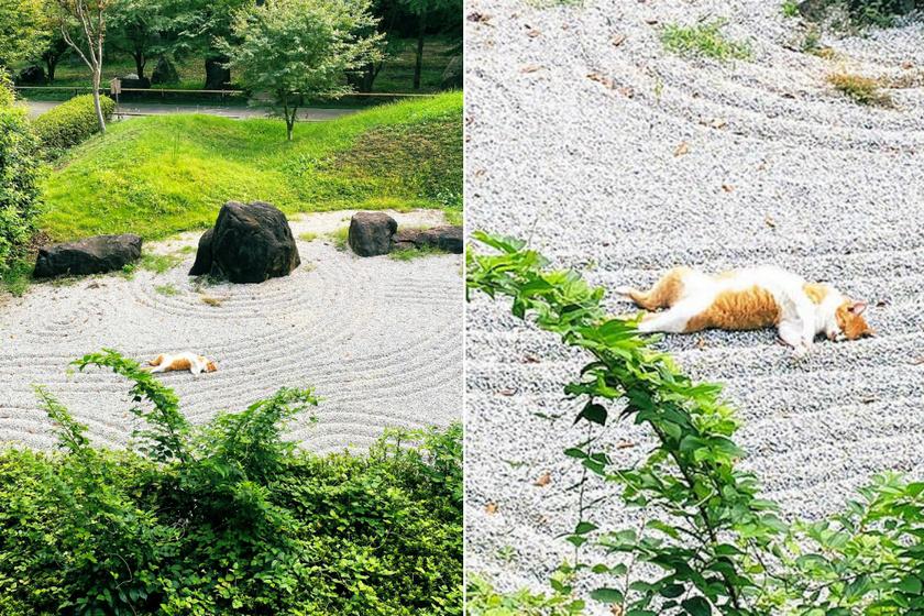 zen kert macska
