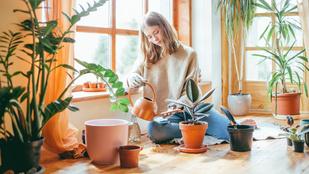Melyik napszakban érdemes locsolni a növényeket?