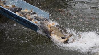 Ó, mely sok hal terem az nagy Balaton-bahha-rahha-rahaha