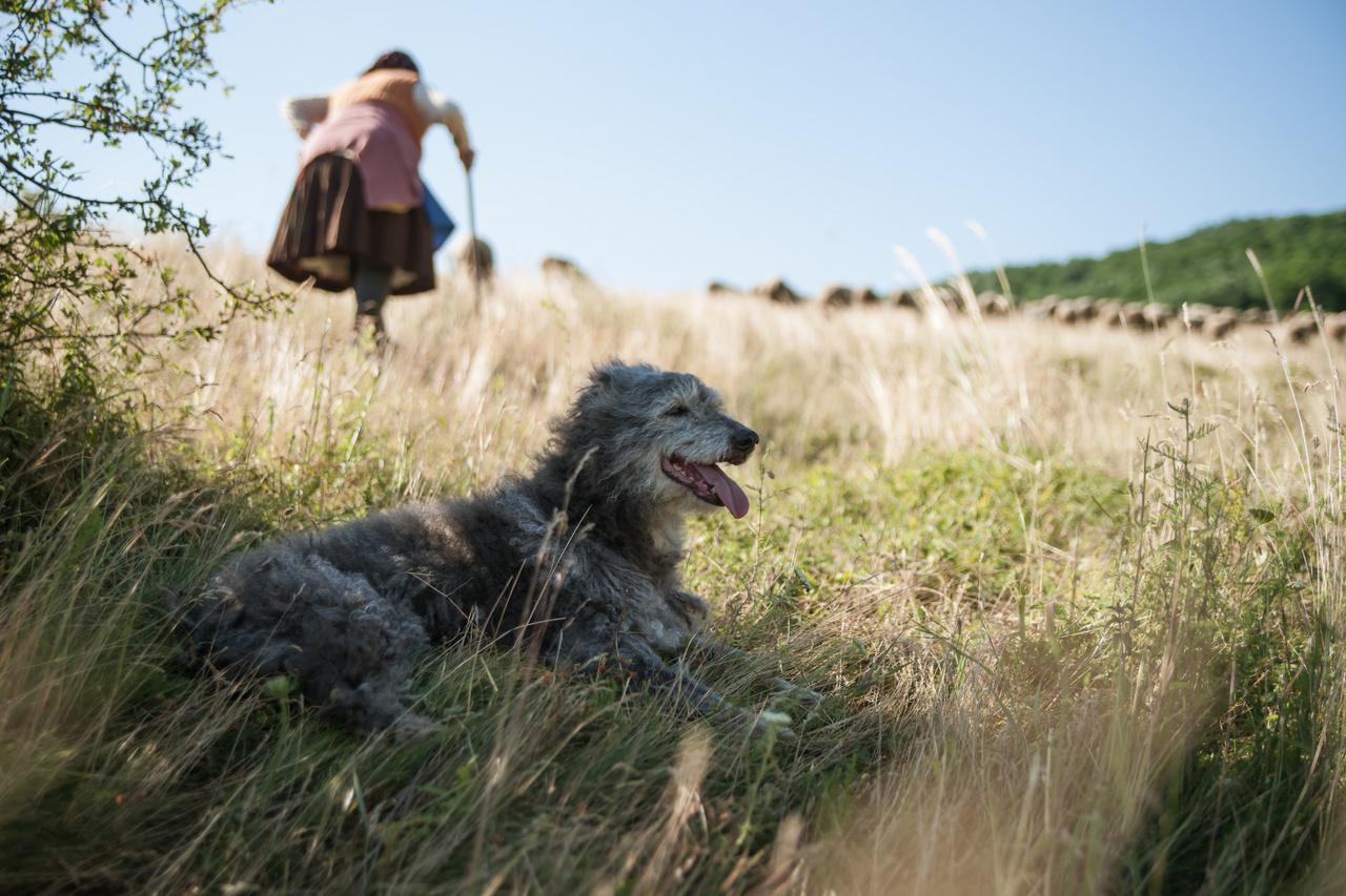 Zsuzsi néni, a helyettes pásztor Fürgével. A kép nagyjából 5 éve készült, de készülhetett volna 100 éve is.