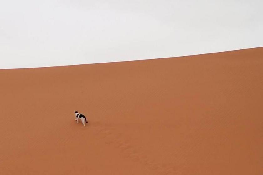- Az utolsó dolog, amire a Szaharán számítottam, hogy felbukkan egy macska. A helyiek azt mondták, hogy időnként ellátogat ide skorpiókra vadászni.