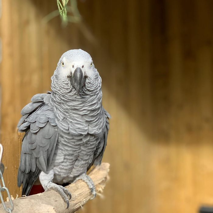 parrots-swearing-removed-lincolnshire-wildlife-park-5-5f74294726