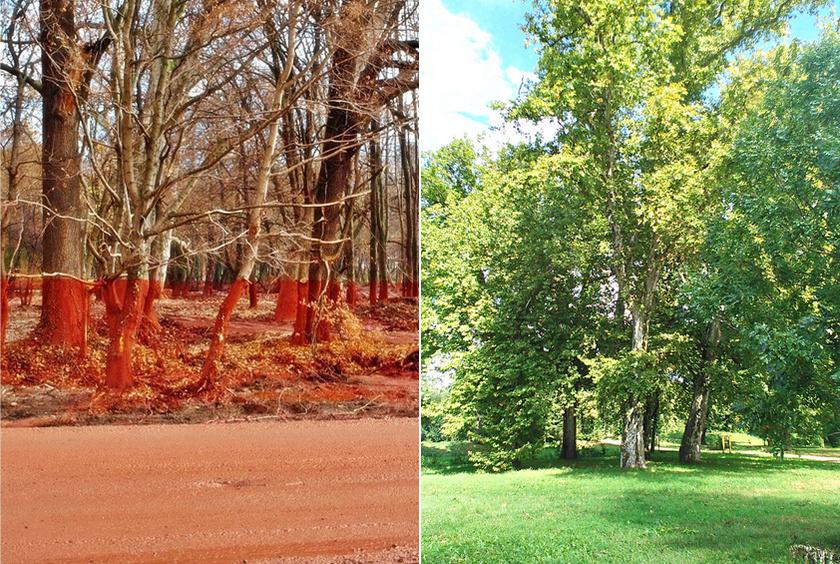 A devecseri Esterházy-kastély parkja 2010 októberében és ma.