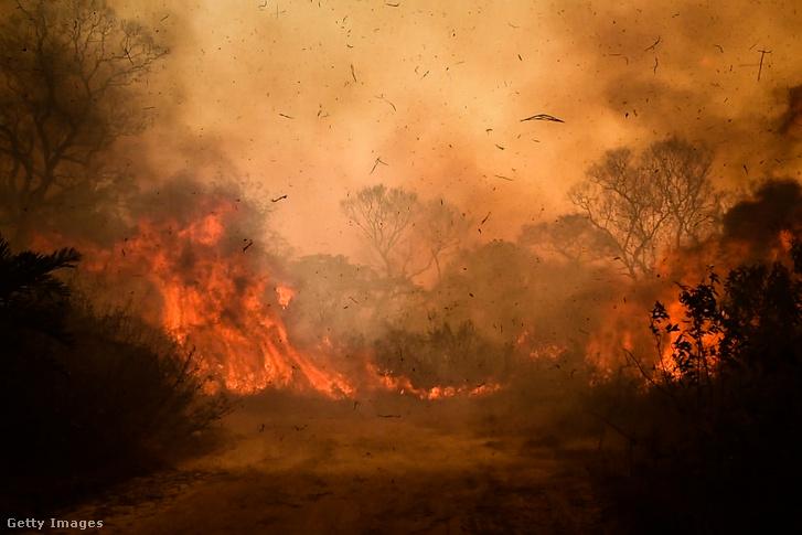 Tűz a Pantanal mocsárvidéken 2020. augusztusában