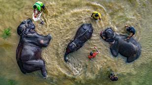 A nap képe: elefántfürdő folyóban, felülről!