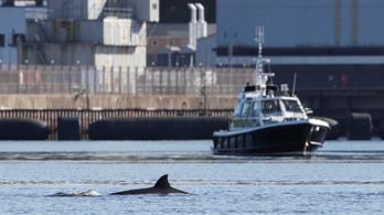 Nem sikerült kiterelni a bálnákat a skóciai tengeröbölből, ahol hadgyakorlatot tartanak