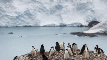 Újraindult a felmelegedés az Antarktiszi-félszigeten
