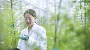 Ez a növény lehet hatásos a koronavírus elleni védekezésben