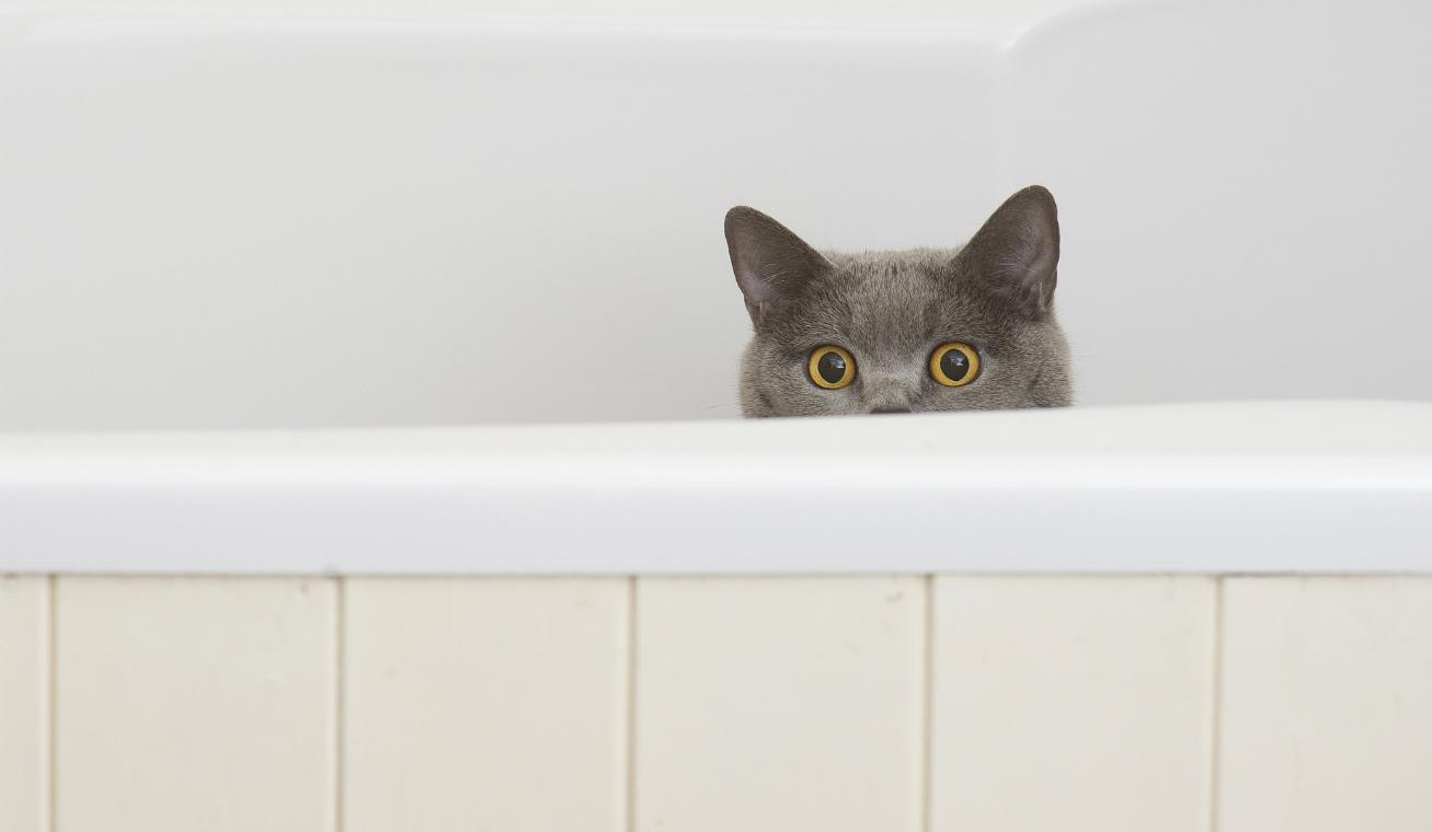 macska privát