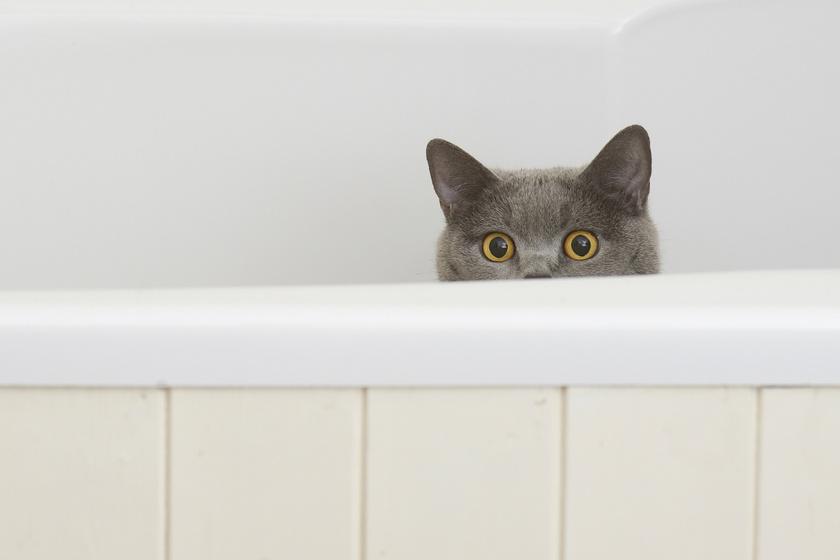 Ezek a macskák nem ismerik a privát szférát: sehol nem zavartatják magukat