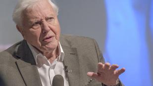 David Attenborough: Nem az intelligencia fogja megmenteni az emberiséget