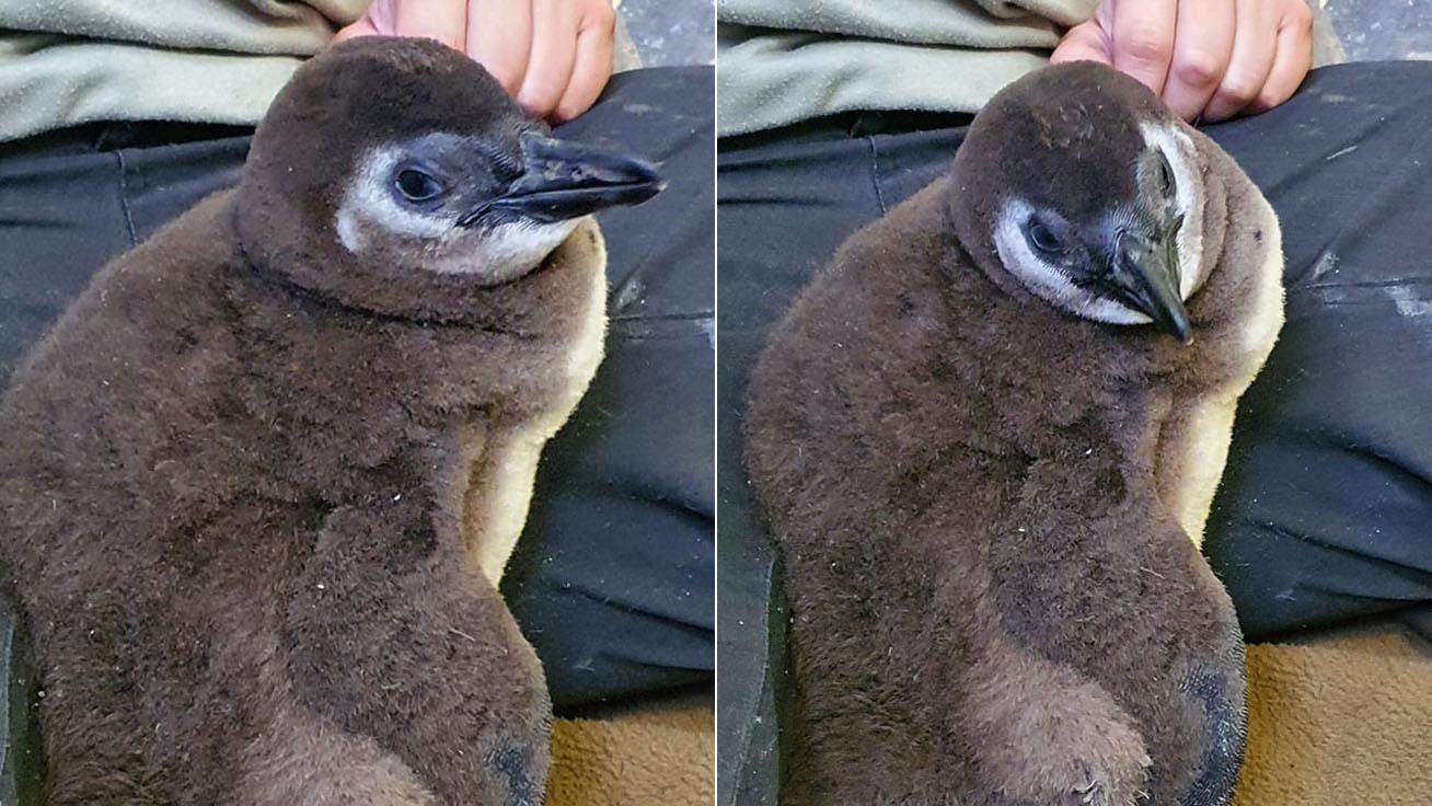 pingvin-szeged