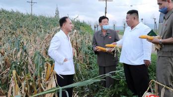 Éhínség kísérheti az Észak-Koreát sújtó hármas csapást