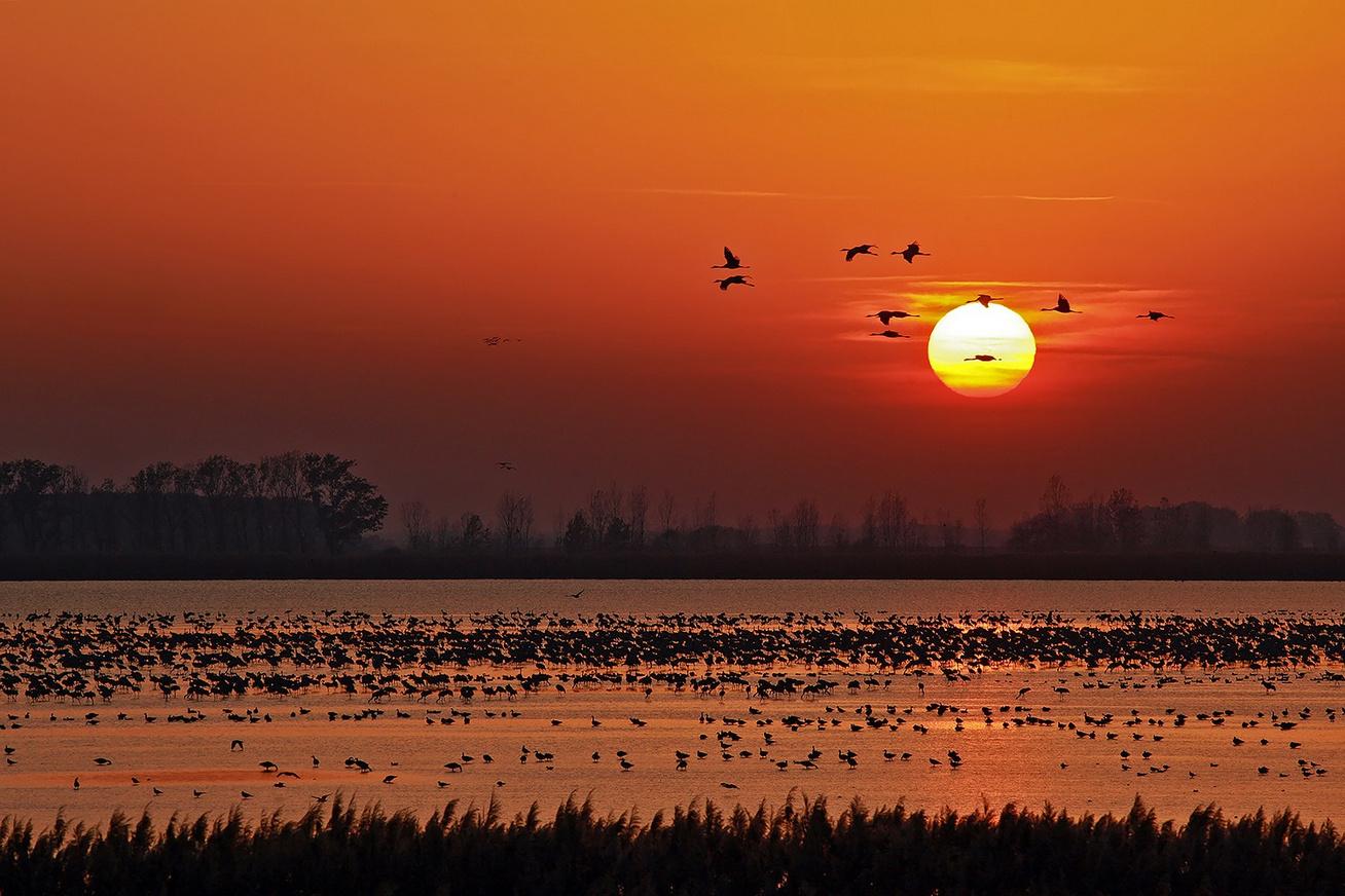 hortobágy darvak naplemente