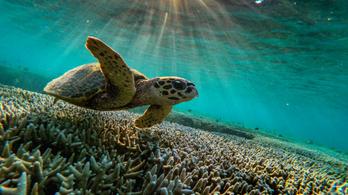 Közösségi tudományos projekt indult a Nagy-korallzátony felmérésére