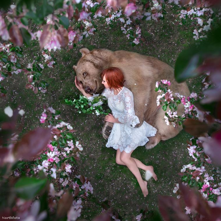 Amikor egy Mila Zhdanova nevű moszkvai fotósnak a fülébe jutott, hogy él az országában egy szelídségéről híres, hatalmas barnamedve, egyből azon kezdett gondolkodni, hogyan tudná egy képsorozathoz felhasználni az állatot