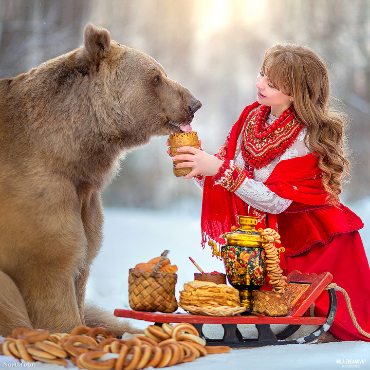 Stepan, a 28 éves medve születése óta emberek között él, mivel édesanyja elhagyta őt
