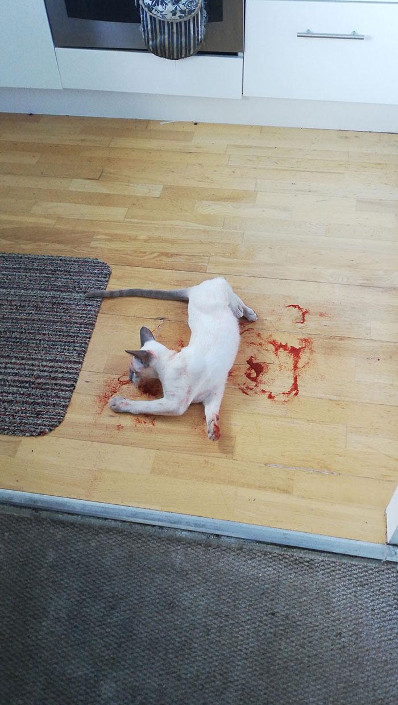 A mókás kedvű cica halálra ijesztette gazdáját, amikor így talált rá. Közelebb lépve aztán már látszott, hogy csak pirospaprikában hempereg éppen.