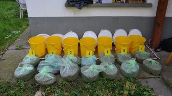 Több mint nyolc kilogramm marihuánával bukott le egy pár a szegvári tanyán