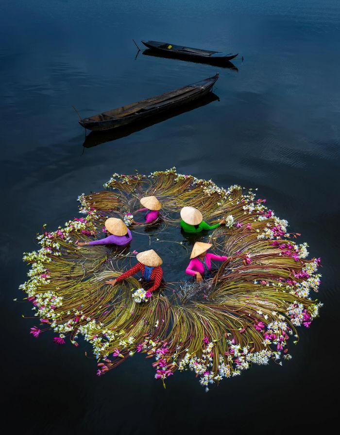vietnam-mekong-delta-lilies-harvest-trung-huy-pham-14-5f71d1f944
