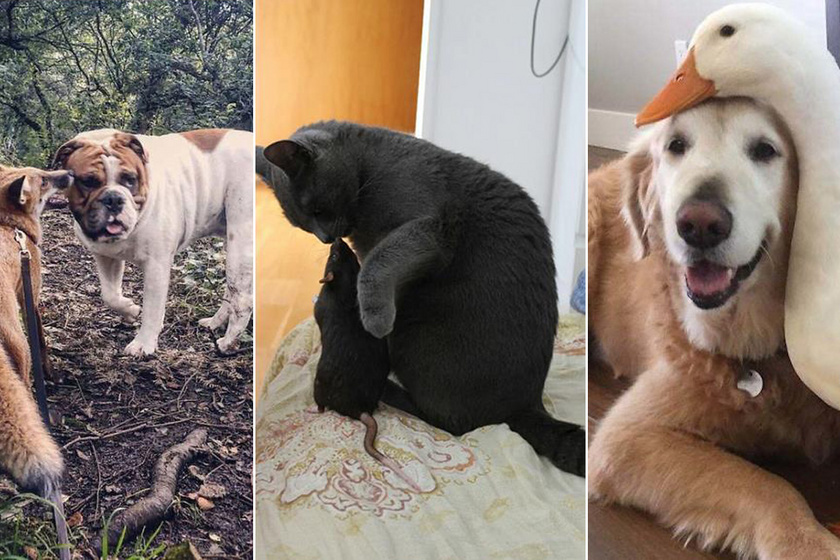 10 állat, aki egészen szokatlan barátot talált magának: van, aki ellenségétől lett elválaszthatatlan
