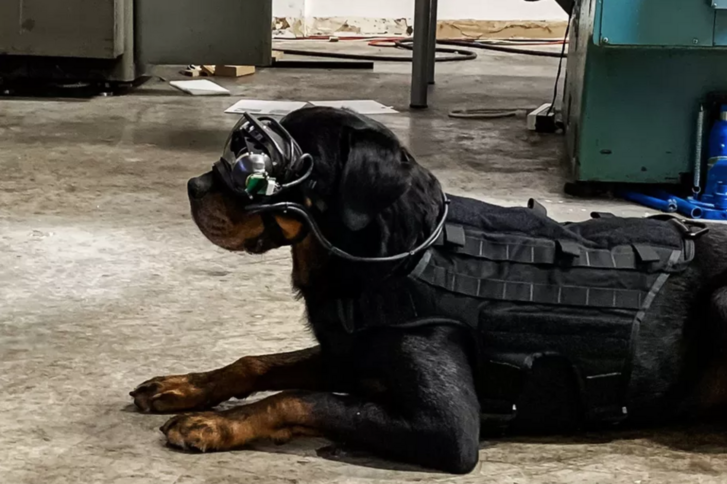 Az AR-szemüveg lehetővé teszi, hogy a kutyának távoli parancsokat adjanak