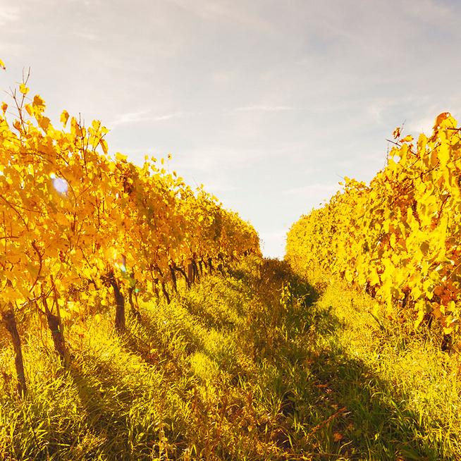 Ezeket a borokat ajánljuk őszre - A könnyed, gyümölcsös vörös a legjobb választás
