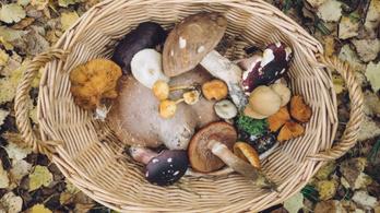 Mérges, pöttyös, bolond, gyilkos: óvatosan a gombákkal