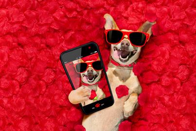 kutya-randioldal-borító