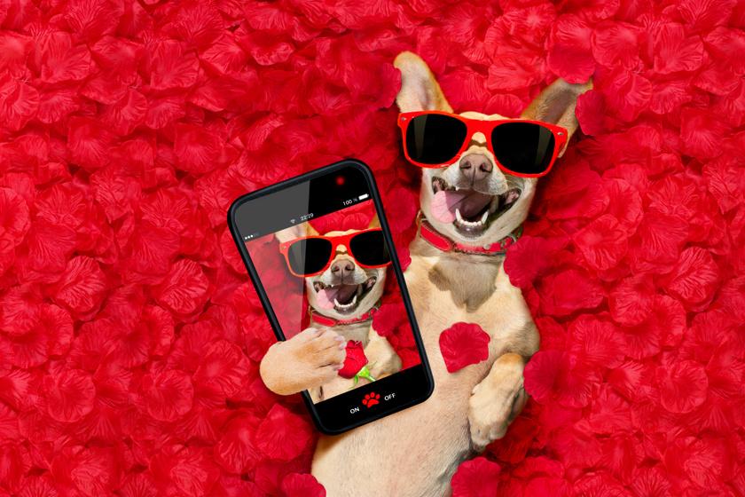Milyen lenne a kutyák profilképe egy randioldalon? Zseniális fotókat osztottak meg a gazdik