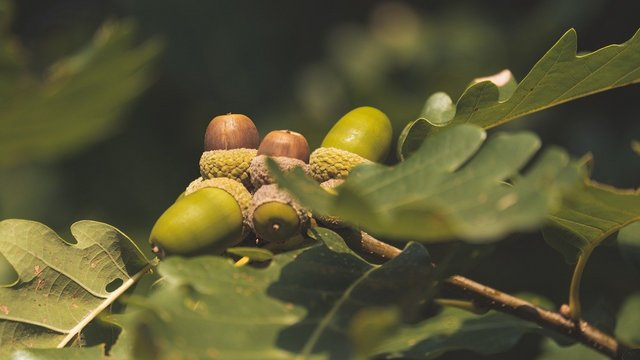 Katonásan természetes: a lágy ősz (ősz-nyár) színtípus