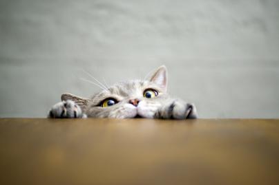 vicces-macskák-borító