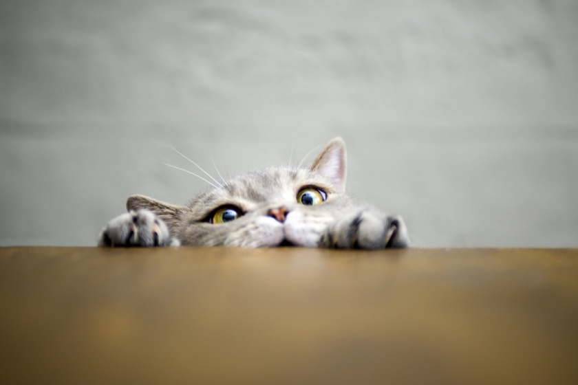 Ennél viccesebb macskás fotókat nem látsz: egyáltalán nem fotogének, de nagyon szórakoztatóak ezek a cicák