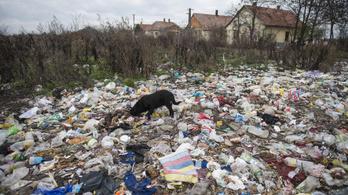 Szeméthelyzet Tiszavasváriban: már megjelentek a patkányok is