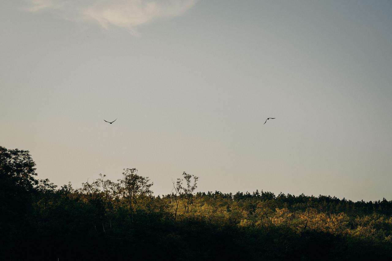 Két holló köröz, krúgásuk visszhangzik a völgyben. Amióta a bivalyok megjelentek, a madárvilág jelentősen megerősödött, és sokféleségében is jelentős fejlődés van.
