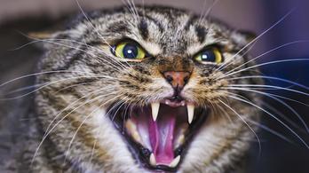 A macskák nem rossz fejek, csak nem értjük a testbeszédüket