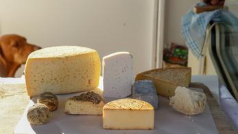 A gasztronómia reneszánsza, avagy a nyers tejes sajtok újrafelfedezése