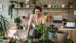4 fontos tudnivaló, hogy ne nyírd ki a szobanövényeidet