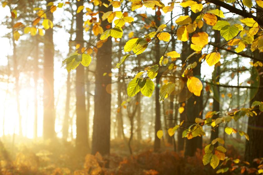 Visszatér a jó idő: napsütésre és melegedésre is számíthatunk a héten