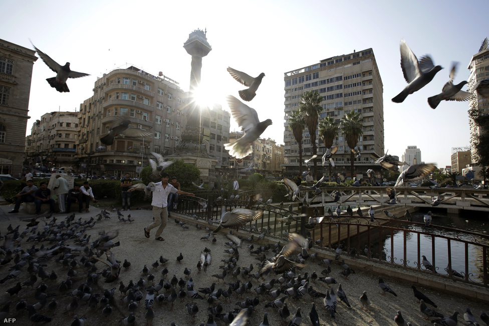 Galambokat etet egy férfi Damaszkuszban