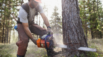Figyelmetlenül vágta a fát, rádőlt az akác a munkásra